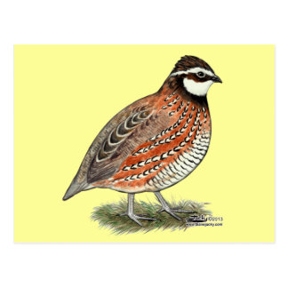 Bobwhite Quail Rooster Postcard