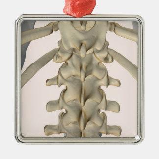 Bones of Lumbar Vertebrae 3 Christmas Ornament