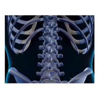 Bones of the Lower Back 2 Postcard