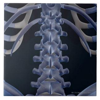 Bones of the Lower Back 2 Tile