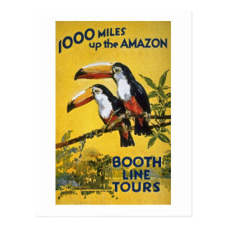 Booth Line Tours 1,000 Miles Up the Amazon Macaws Postcard