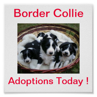 Border Collie Dog Adoptions Today Sign