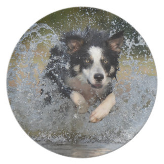 Border Collie jumping in water Plate