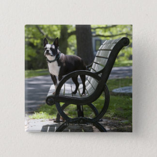 Boston Terrier 15 Cm Square Badge