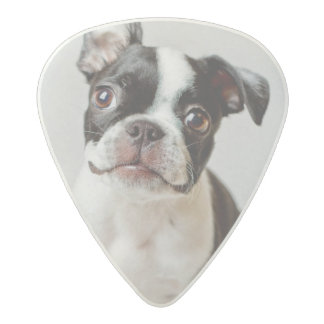 Boston Terrier Acetal Guitar Pick