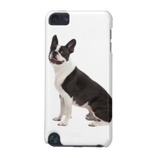 Boston Terrier dog beautiful photo, gift iPod Touch (5th Generation) Cover