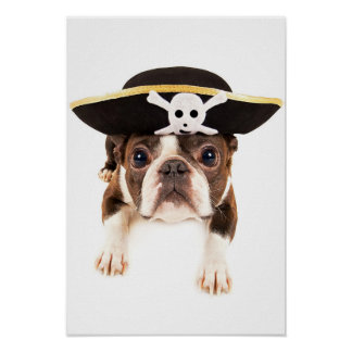 Boston Terrier Dog Dressed As A Pirate Poster