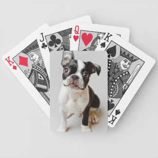 Boston Terrier dog puppy. Bicycle Playing Cards