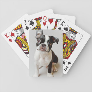 Boston Terrier dog puppy. Playing Cards