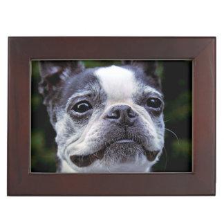 Boston Terrier Keepsake Box