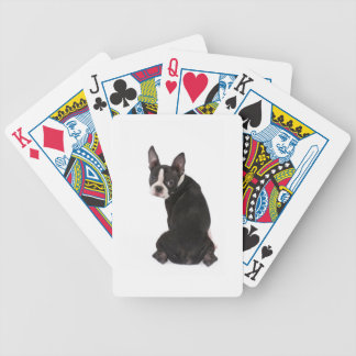 Boston Terrier Looking at You Playing Cards