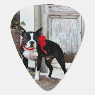Boston Terrier - Miles Guitar Pick