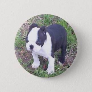 Boston Terrier Puppy 6 Cm Round Badge