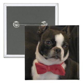 boston terrier w/red bowtie 15 cm square badge