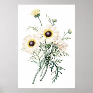 Botanical PREMIUM QUALITY print of chrysanthemum