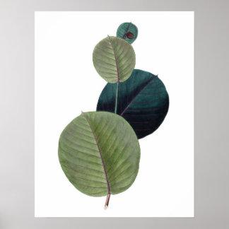 Botanical PREMIUM QUALITY print of manihot leaves