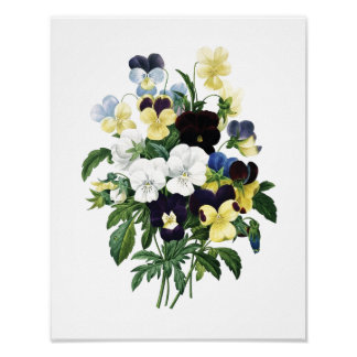 Botanical print of PANSIES original by Redoute