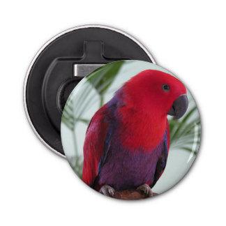 Bottle Opener Eclectus parrot red female pet