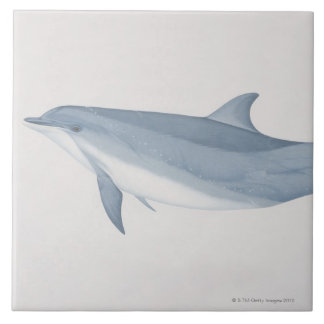 Bottlenose Dolphin Large Square Tile