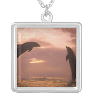 Bottlenose Dolphins Tursiops truncatus) 14 Silver Plated Necklace