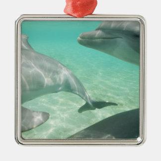 Bottlenose Dolphins Tursiops truncatus) 19 Christmas Ornament