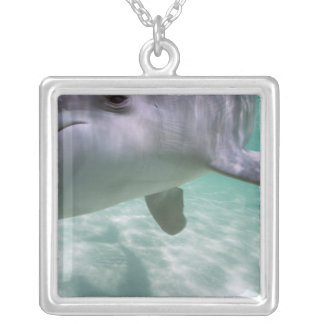 Bottlenose Dolphins Tursiops truncatus) 21 Silver Plated Necklace