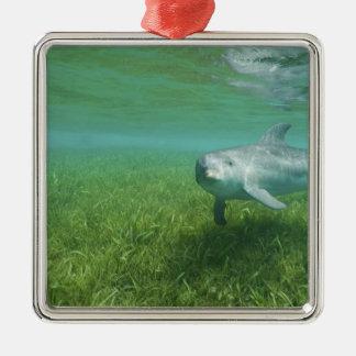 Bottlenose Dolphins Tursiops truncatus) 24 Christmas Ornament