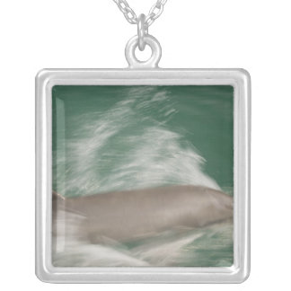 Bottlenose Dolphins Tursiops truncatus) 28 Silver Plated Necklace