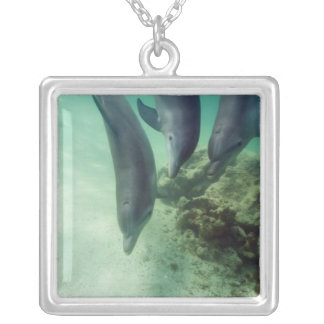 Bottlenose Dolphins Tursiops truncatus) 5 Silver Plated Necklace