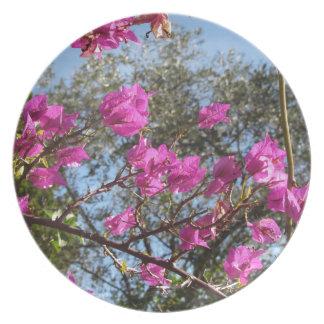 Bougainvillea flowers plate