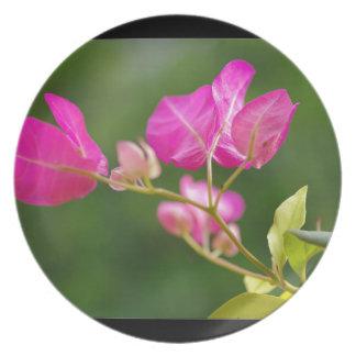 Bougainvillea glabra flower plate