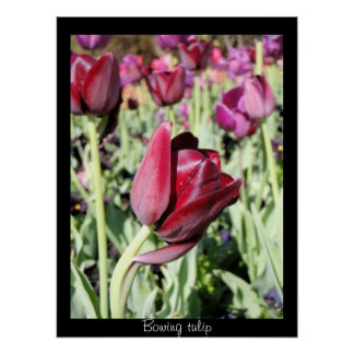 Bowing tulip poster