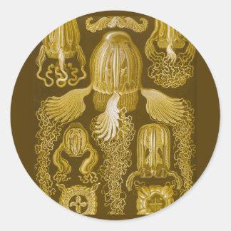 Box jellyfish classic round sticker