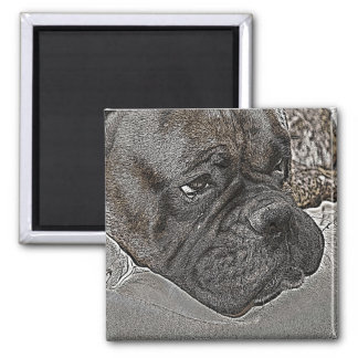 Boxer Dog Magnet