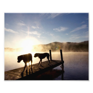 Boxer Dogs on Foggy Dock Photographic Print