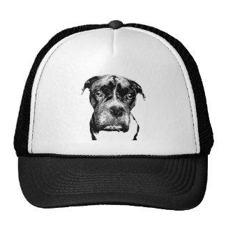Boxer Hund Kepsar