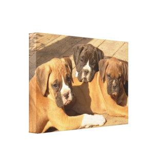 Boxer puppies canvas print