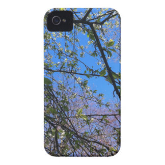 Branches and blue sky iPhone 4 covers