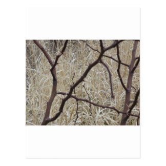 Branches and Dry Grass Postcard