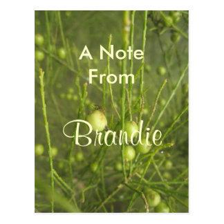 Brandie Postcard