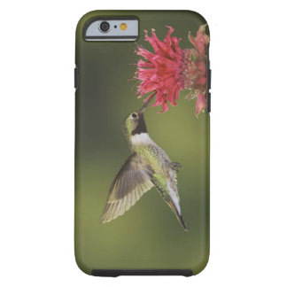 Breit-angebundener Kolibri, Selasphorus 2 Tough iPhone 6 Case