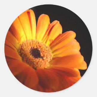Bright Orange Painted Daisy Round Sticker