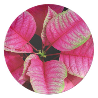 Bright Pink Poinsettia Plate
