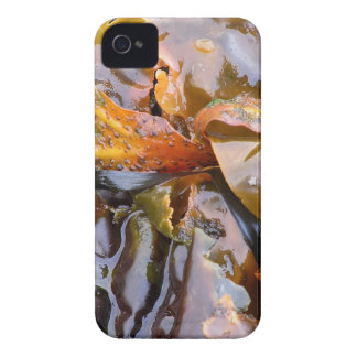 Bright Seaweed (blackberry case) iPhone 4 Case-Mate Cases