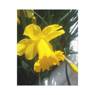 """BRIGHT YELLOW DAFFODIL ART CANVAS 8 x 10"""" Stretched Canvas Prints"""