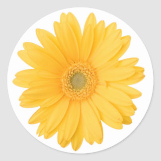Bright Yellow Gerbera Daisy Flower Classic Round Sticker