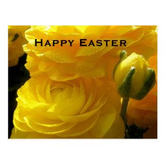 Bright Yellow Ranunculus Easter Flowers Postcards