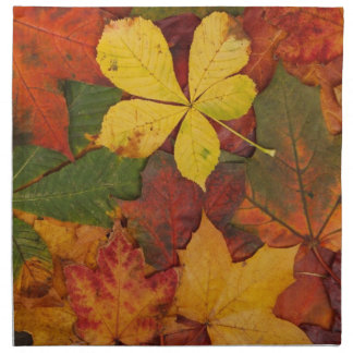 Brightly Colored Fall Leaves Napkin