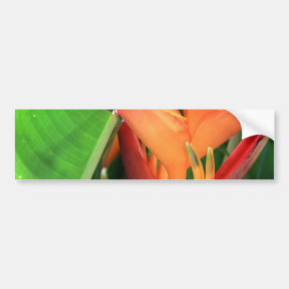 Brilliant Heliconia Tropical Flowers Bumper Sticker