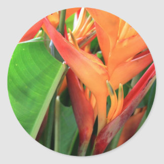 Brilliant Heliconia Tropical Flowers Classic Round Sticker